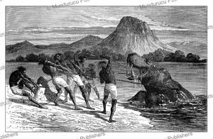 The ultimate pray, a hippopotamus, with Samuel White Baker, Emile Bayard, 1872   Photos and Images   Digital Art