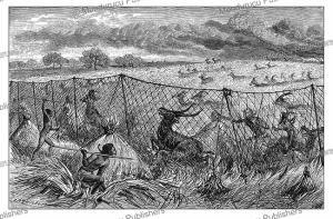 Hunters of the Shooli tribe using nets, Uganda, Johann Baptise Zwecker, 1874 | Photos and Images | Digital Art