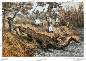Attack by the crocodile in Tanzania, from the novel Kalulu by Henry Stanley, P.J. Andriesen, 1875 | Photos and Images | Digital Art