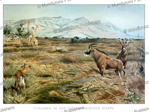 Animal life in East Africa, W. Kuhnert, 1891 | Photos and Images | Digital Art