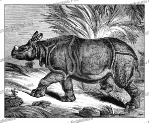 The rhinoceros, East Africa, Jules Garnier, 1871 | Photos and Images | Digital Art