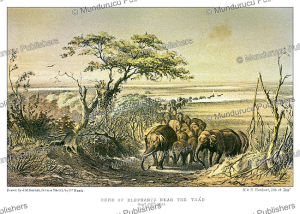 a herd of elephants near the chad river, september 25, 1851, j.m. bernatz, 1857