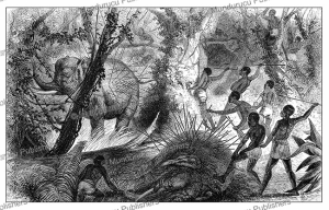 Fan warriors hunting elephants in Equatorial Africa, J. Whitney, 1861 | Photos and Images | Digital Art