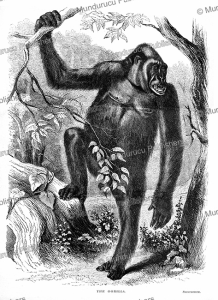 The Gorilla in Equatorial Africa, Paul du Chaillu, 1861 | Photos and Images | Digital Art