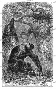gorillas and nest as seen by winwood reade in gabon or french congo, josiah wood whymper, 1885