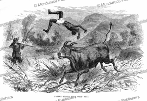 Native tossed by a wild bull, Equatorial Africa, E.V. Whitney, 1861 | Photos and Images | Digital Art