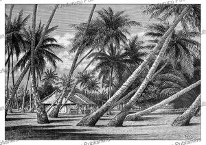 Tuamotu Archipelago, Tahiti, P. Langlois, 1893 | Photos and Images | Digital Art