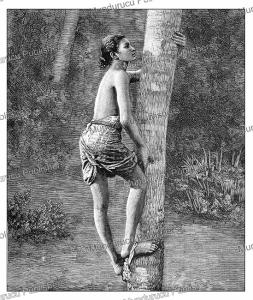 How the natives of Ceylon (Sri Lanka) climb trees, The Graphic, 1888 | Photos and Images | Digital Art