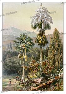Plant life in Ceylon (Sri Lanka), O. Winkler, 1892 | Photos and Images | Digital Art