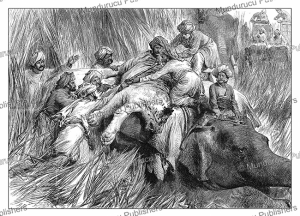 The Prince of Wales in Nepal Terai padding a tiger, India, The London Illustrated News, 1876 | Photos and Images | Digital Art