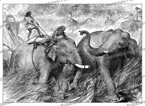 Tame elephant hunting a wild elephant for the Prince of Wales, India, The London Illustrated News, 1876 | Photos and Images | Digital Art