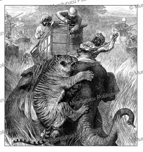 colonel arthur ellis shooting a tiger in nepal terai with the prince of wales, india, the london illustrated news, 1876