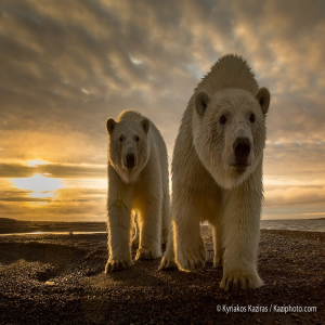 the best photography BY PROSHOP | Photos and Images | Animals