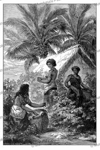Samoan girls picking cotton, Franz Keller-Leuzinger, 1880   Photos and Images   Digital Art