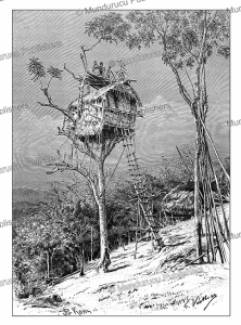 Tree house of the Koyari or Korowai of South-East New Guinea, G. Vuillier, 1889 | Photos and Images | Digital Art