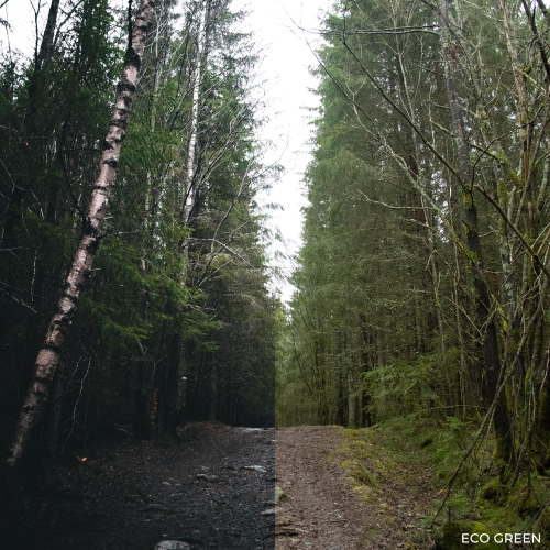 Third Additional product image for - 16scenes Moody Presets Pack