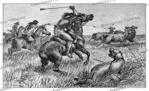 a hunter using bolas to kill a puma while mounted on a horse, patagonia, johann baptise zwecker, 1877