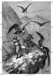 condor hunting near calacali, equador, e´douard riou, 1883