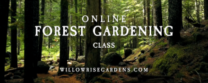 forest gardening class: session 3: 7 forest layers
