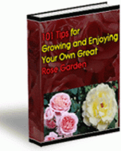 101 tips for growing your own great rose garden