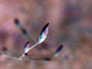 Bud One | Photos and Images | Botanical