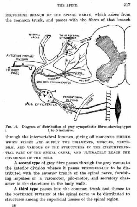 Third Additional product image for - A Text Book of The Principles of Osteopathy