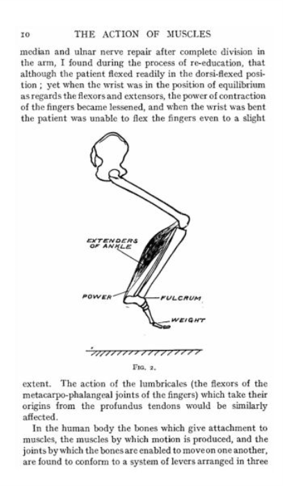 Second Additional product image for - The Action of Muscles By William Colin Mackenzie