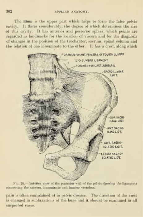 Second Additional product image for - Applied Anatomy for Osteopathic Students