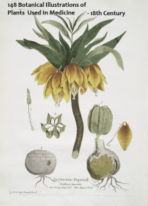 148 18th Century Botanicals-Nicolas Regnault | Photos and Images | Botanical