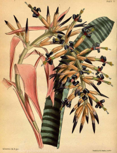 70 Botanical Illustrations of Succulents/Cacti | Photos and Images | Botanical