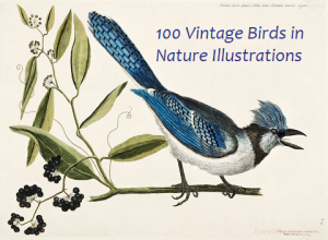 100 full color  vintage bird illustrations