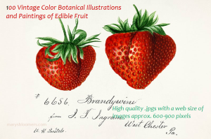100 color vintage botanical art and illustrations of edible fruit