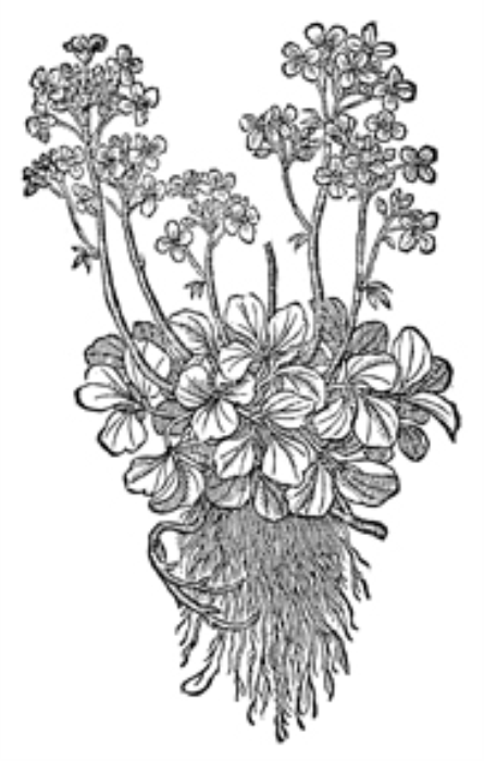 Second Additional product image for - Vintage Black and White Herbal Illustrations
