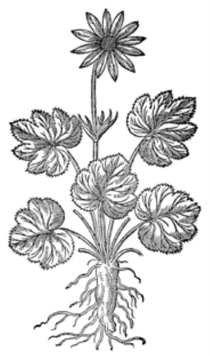Fourth Additional product image for - Vintage Black and White Herbal Illustrations