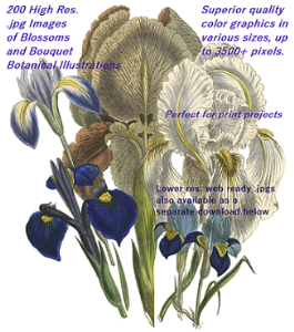 200 blossoms and bouquets botanical illustrations-72 dpi