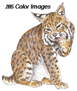 285 full-color graphics - animal kingdon