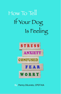 how to tell if your dog is feeling; stress, anxiety, confused, fear, worry