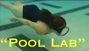 pool lab: the snakes