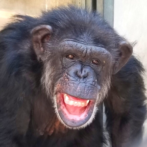 beautiful original animal photos- 75% goes to animal charities!!!!!