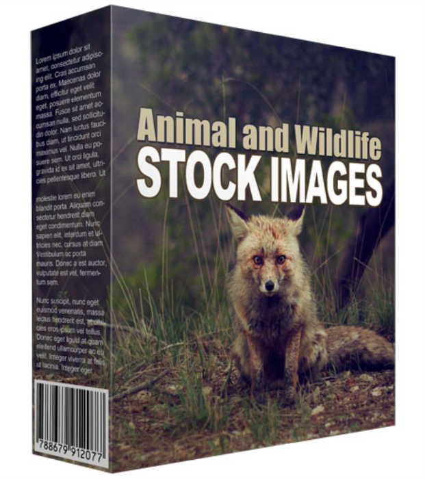 First Additional product image for - Animal and Wildlife Stock Images (34 Images)
