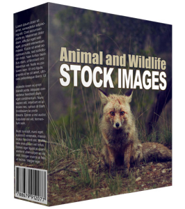 animal and wildlife stock images (34 images)