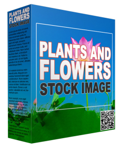 plants and flowers stock images (29 images)