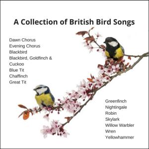 british bird song zip folder format