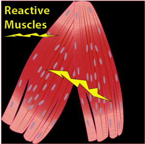 reactive_muscles_with_earl_cook_workbook