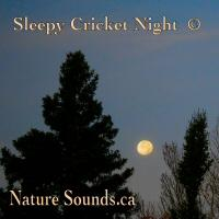 Sleepy Cricket Night | Music | New Age