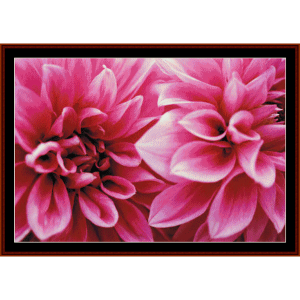 dahlias - floral cross stitch pattern by cross stitch collectibles