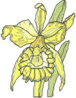 jonquil cross stitch pattern
