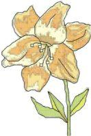 lily cross stitch pattern