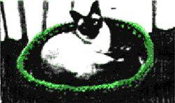 Cat Bed Crochet Pattern | eBooks | Arts and Crafts