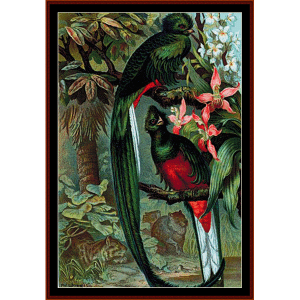 resplendent trogon - wildlife cross stitch pattern by cross stitch collectibles